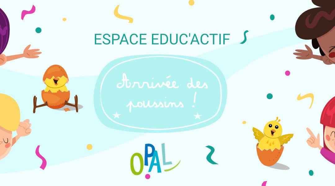 ESPACE EDUC'ACTIF – ARRIVÉE DES POUSSINS